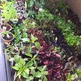 Photo Of Evergreen Nursery San Leandro Ca United States Great Selection