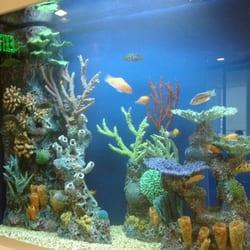 Champion Aquariums 39 Photos Aquarium Services Fort