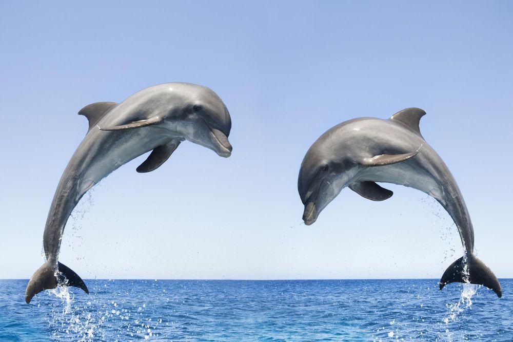 Island Adventure Dolphin Cruise: 510 Dodecanese Blvd, Tarpon Springs, FL