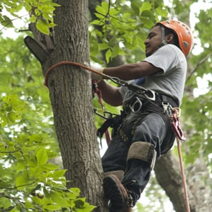 North Raleigh Tree & Bucket Truck Services: 14725 New Light Rd, Wake Forest, NC