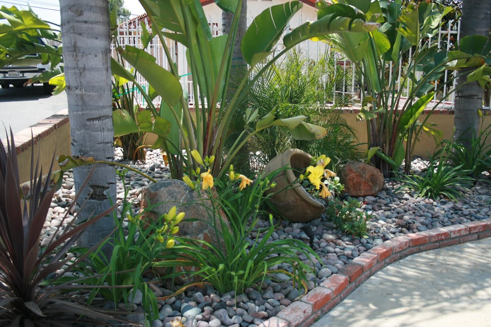 Giant Bird Of Paradise Daylilies And Accent Pot With