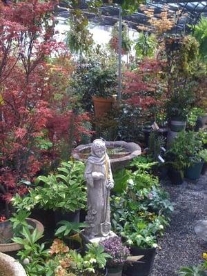 Photo Of Campbellu0027s Greenhouses U0026 Nursery   Charlotte, NC, United States