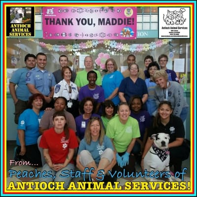 antioch animal services 300 l st antioch ca city government
