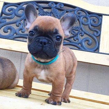 Family Bullies - 60 Photos & 13 Reviews - Pet Breeders - San