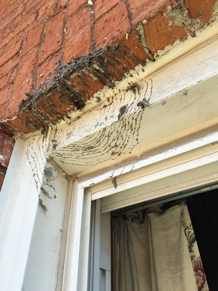 A Team Pest Prevention and Removal: Grand Island, NY