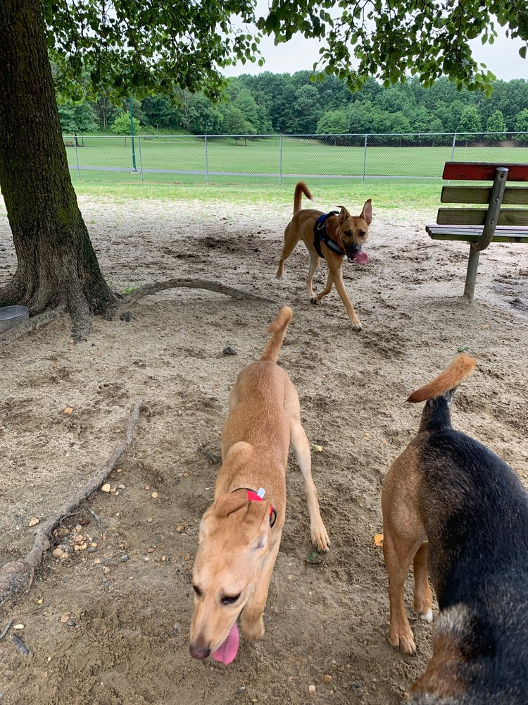 Connolly Dog Park
