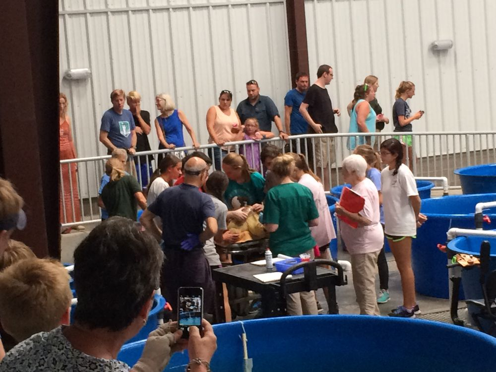The Karen Beasley Sea Turtle Rescue And Rehabilitation Center: 302 Tortuga, Surf City, NC