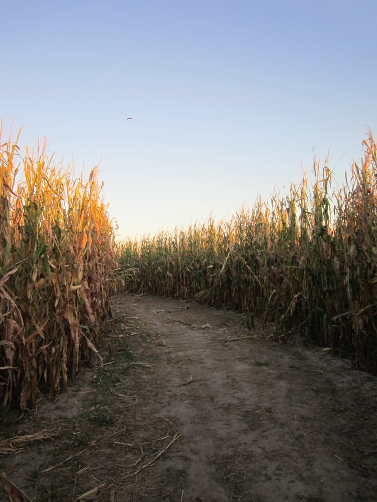 Liberty Corn Maze: 17607 NE 52nd St, Liberty, MO
