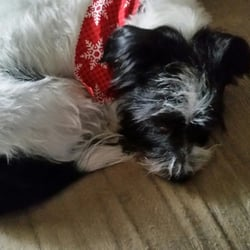 Absolutely paws itive 13 reviews pet groomers 509 southland dr photo of absolutely paws itive lexington ky united states jack after solutioingenieria Choice Image