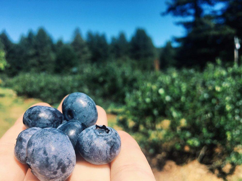 Noble Berry Farm: 3563 Fieldbrook Rd, McKinleyville, CA