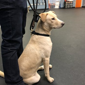 Zoom Room Dog Training - Famous Dog 2018