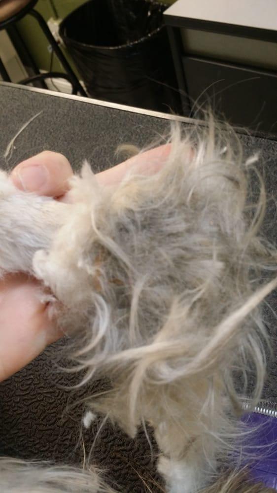 4 paws pet salon ferm 10 photos toilettage 80 n for 4 paws pet salon