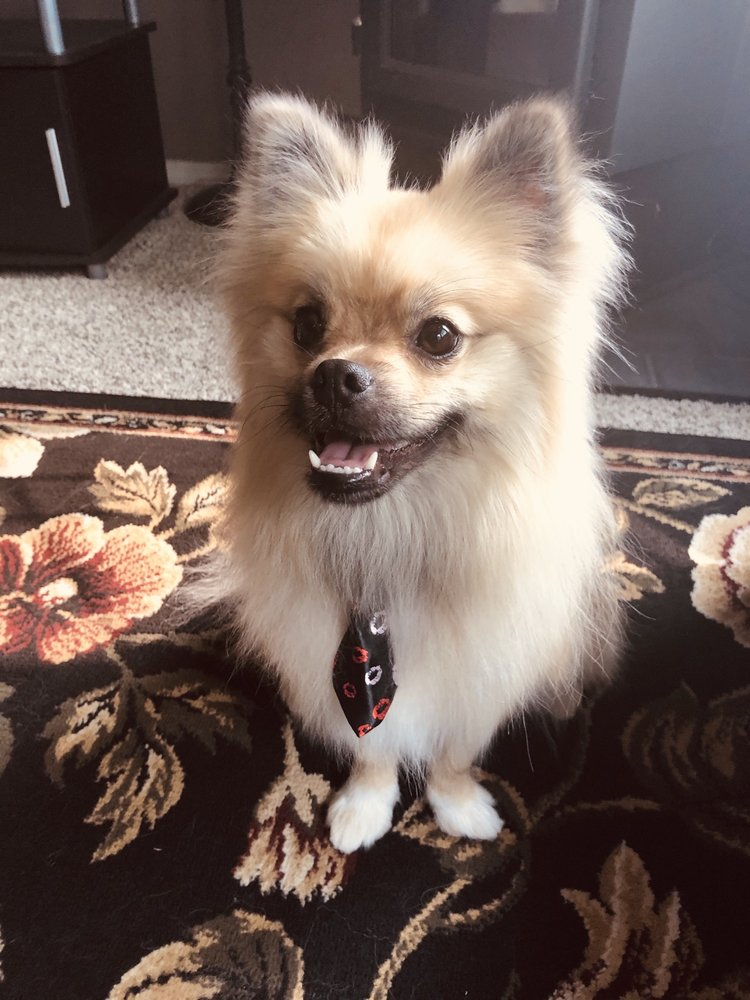 Wagz2Riches Premier Dog Grooming: 4303 W 27th Ave, Kennewick, WA