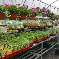 Photo Of Bosco S Garden Center Simsbury Ct United States Organic Veggie Greenhouse