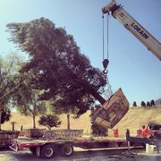 United States Photo Of Brightview Tree Company Fillmore Ca