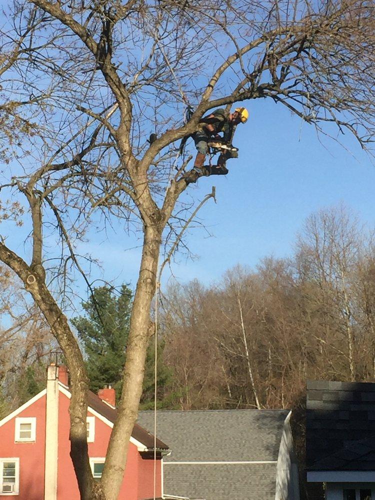 All Seasons Tree Care: 2085 Johnston Ave, Bethlehem, PA