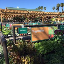 Photo Of Armstrong Garden Centers Newport Beach Ca United States Veggies
