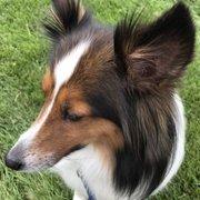 Four paws company 22 reviews pet groomers 1225 ken pratt bark me beautiful solutioingenieria Images