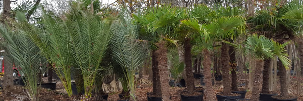 Alfaro Tree Sales: 10835 Pearsall Rd, Atascosa, TX