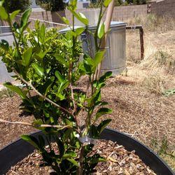 Fast Growing Trees Nursery 17 Mga Reviews Nurseries