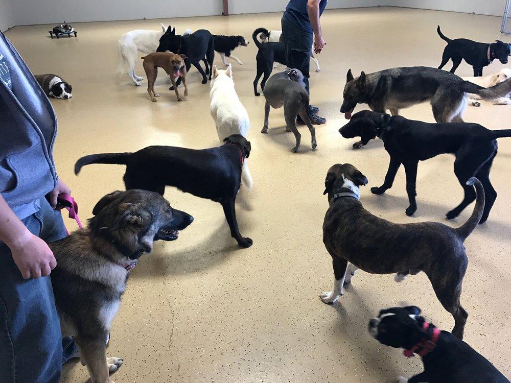 Unleashed Unlimited Dog Training: 15300 Hero Way W, Leander, TX