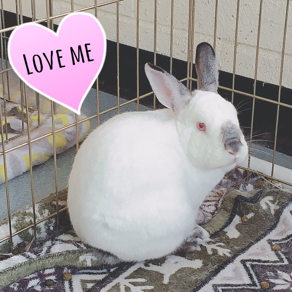 Rabbit Meadows 22 Reviews Pet Adoption 8030 Ne Bothell Way