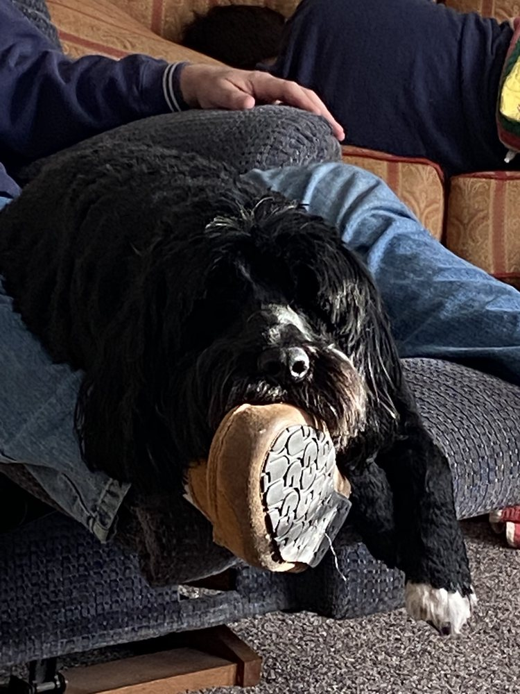 Classy Canine: 535 Marshall St, Litchfield, MI