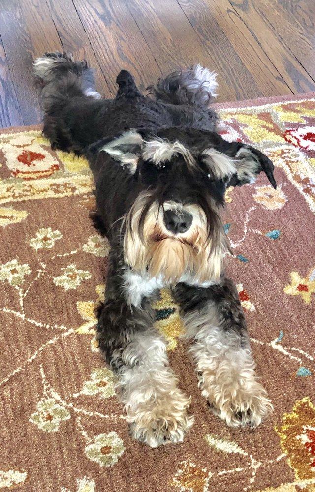 Bark Busters Home Dog Training: Westchester, NY