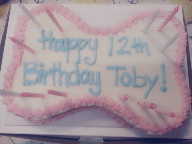 My Tobys 12th Birthday Cake From Happy Husky Bakery Yelp