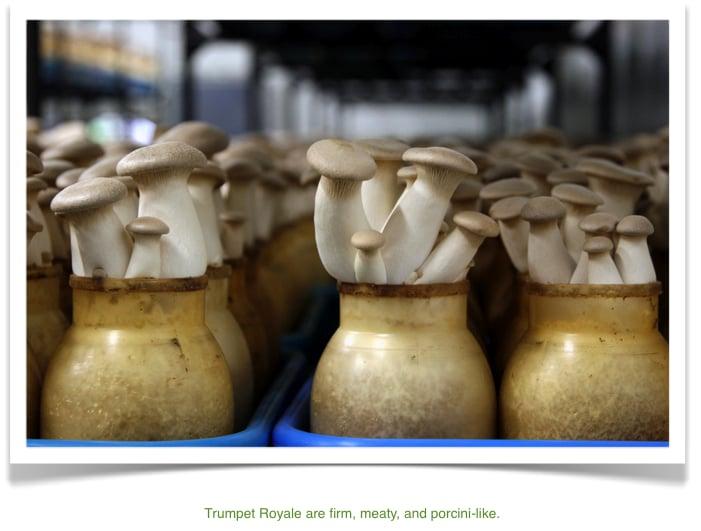 Gourmet Mushrooms: 2901 Gravenstein Hwy N, Sebastopol, CA