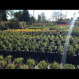 Photo Of Green Tree Nursery Somis Ca United States