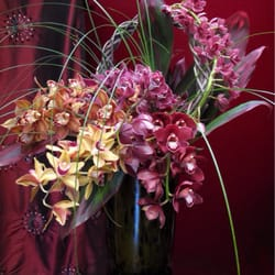 Photo Of Century City Flower Mart Los Angeles Ca United States Orchid