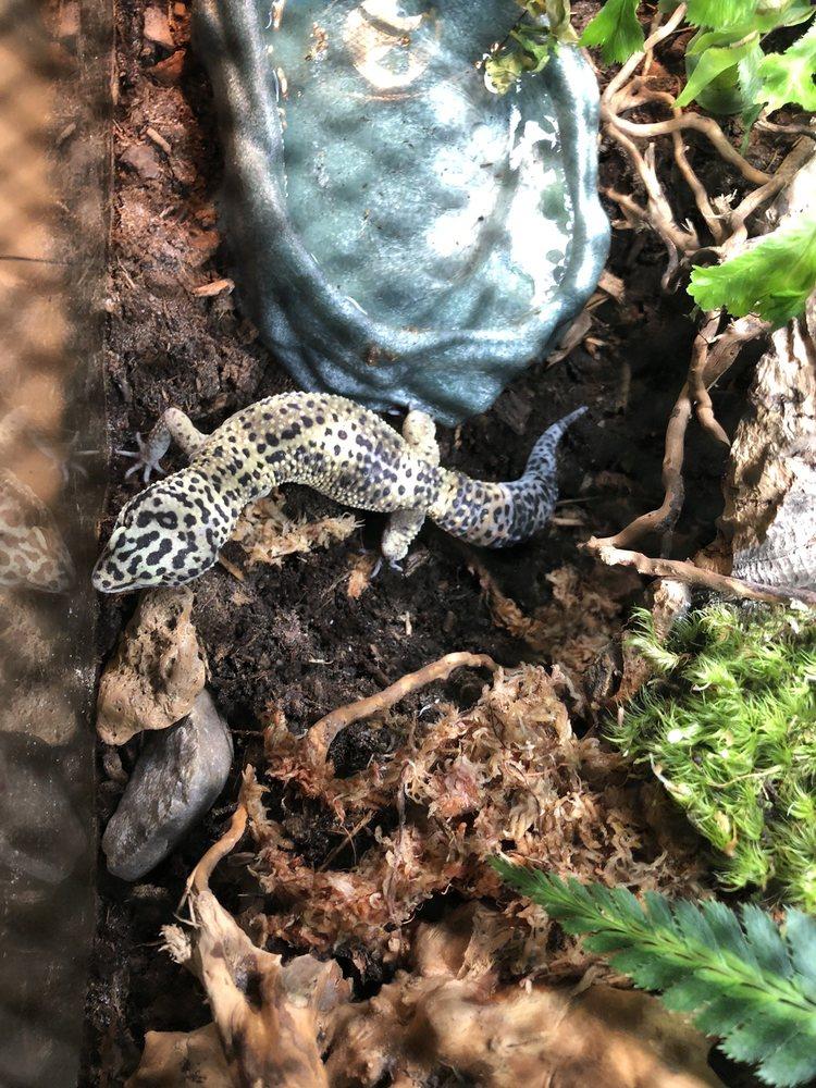 Rainforest Pets: 2121 W Main St, League City, TX