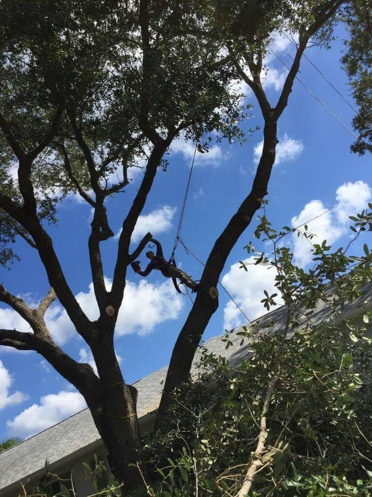 Mathews tree service