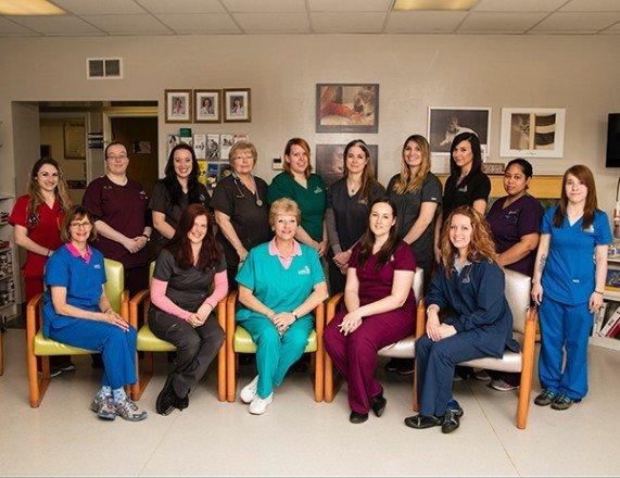 Larkin Veterinary Center: 2333 Penn Ave, West Lawn, PA