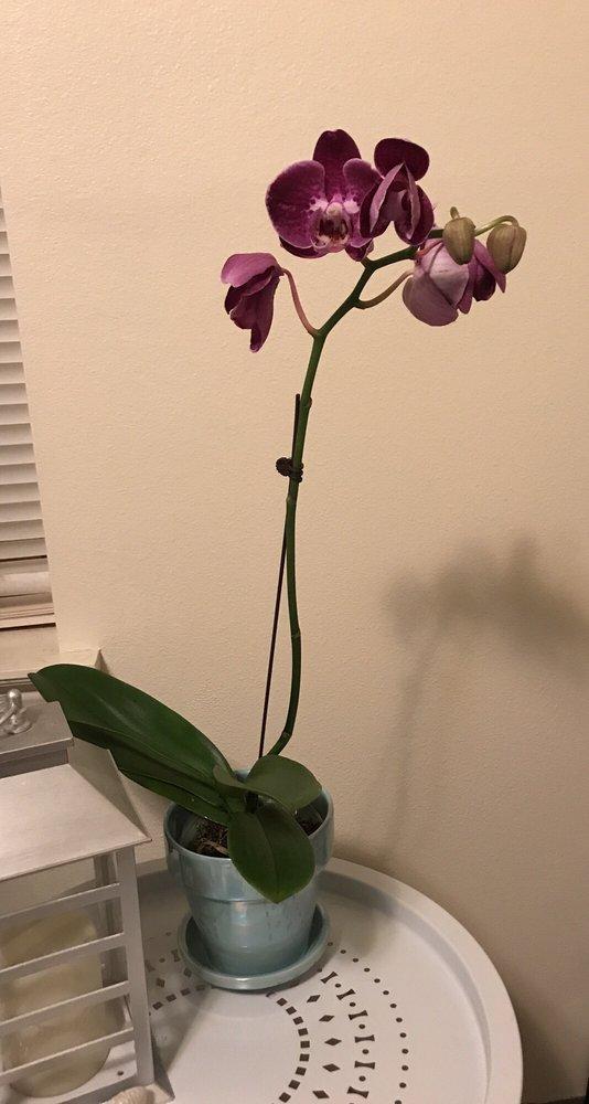 Harold's Indoor & Outdoor Plants