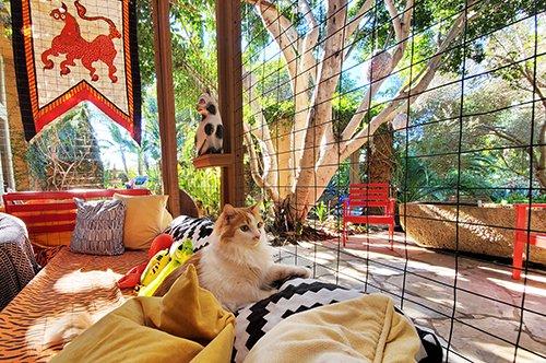 Cat-Villa