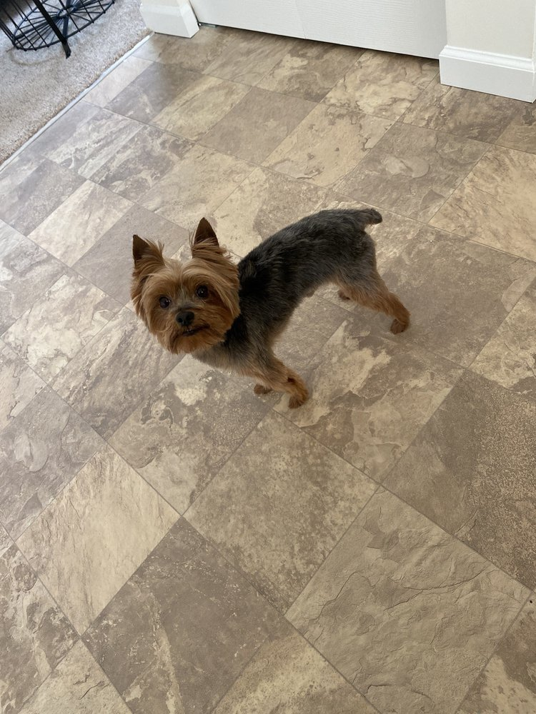 Dog-Gon Gorgeous by Arf: 5640 Groveport Rd, Groveport, OH