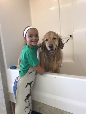 You dirty dog 44770 san pablo ave palm desert ca pet grooming hotels nearby solutioingenieria Images