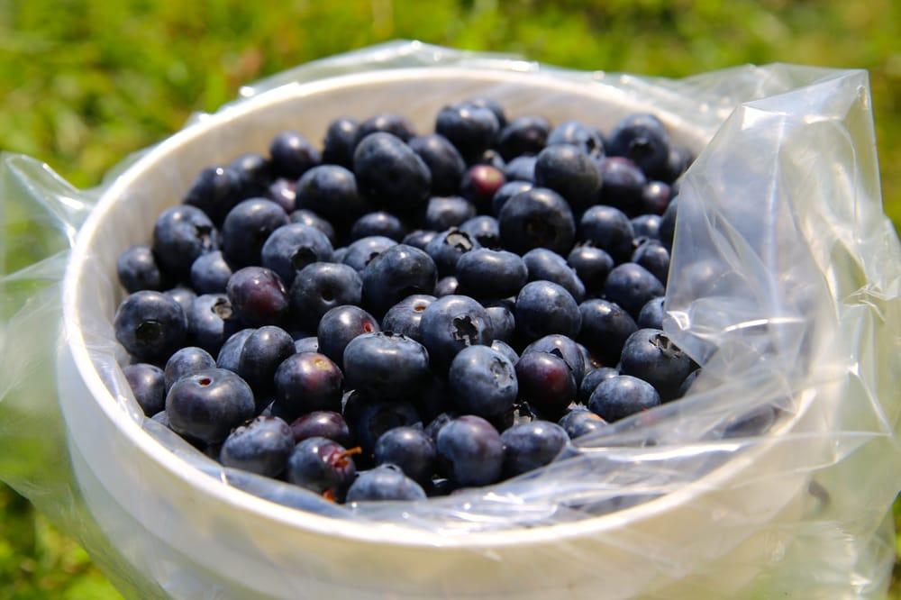 Stutzman Farms U-Pick Blueberries: 8690 Hwy 422 E, Penn Run, PA