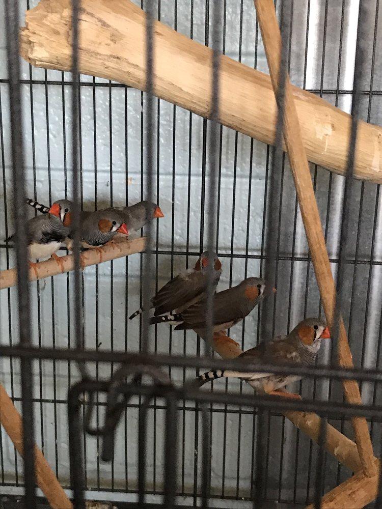 AZ Exotic Bird Rescue - 16 Photos & 21 Reviews - Pet Sitting