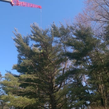 Photo Of Community Tree Service Chelmsford Ma United States Surgeon Down