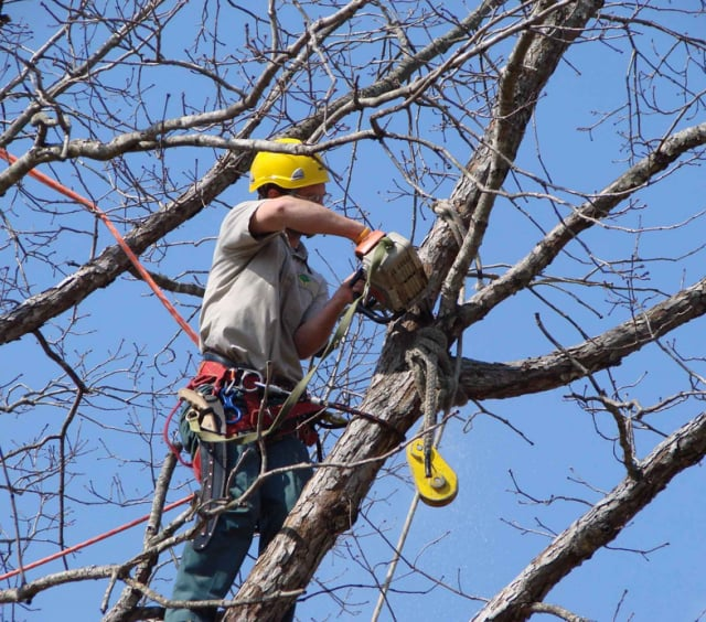 We Care Tree Service: 2970A Merrick Rd, Bellmore, NY