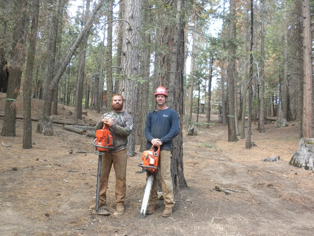 Clovis Tree Service