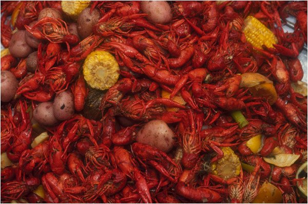 New Orleans Cajun Cafe: 15100 Bellaire Blvd, Houston, TX