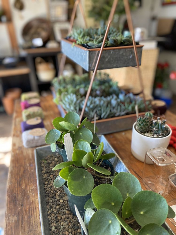 Curious Plants and Treasures: 34380 Hwy 101 S, Cloverdale, OR