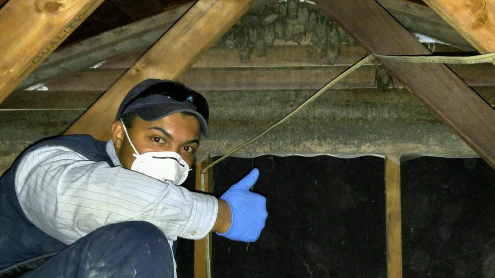 Budget Pest Control: 3801 Mcknight E Dr, Pittsburgh, PA