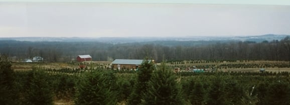 Galehouse Tree Farms: 11762 Coal Bank Rd, Doylestown, OH
