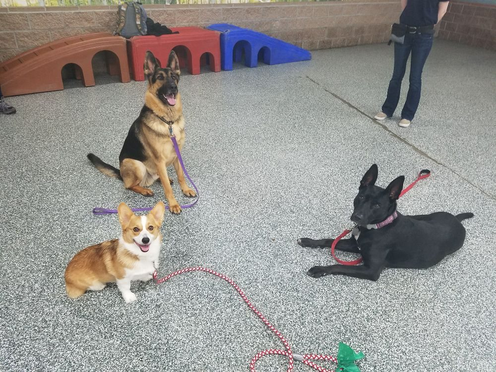 Athens Dog Training: 2489 Washington Ave, San Leandro, CA