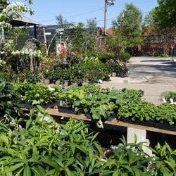 Joshuas Native Plants Garden Antiques 81 Photos 39 Reviews